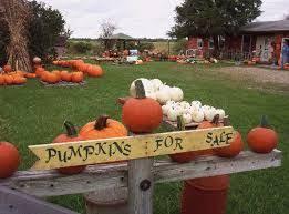Pumpkin Patch North Bend Oregon by 198 Best Pumpkin Patch Images On Pinterest Centerpieces
