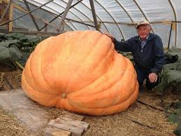 Atlantic Giant Pumpkin Taste by We Spoke To A 90 Year Old Farmer Who Grows Pumpkins The Size Of