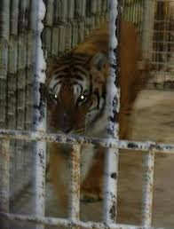 Grosse Tete Truck Stop Gets Permit Allowing Tony The Tiger To Stay ...