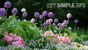 5 favorite fall planted flower bulbs garden club