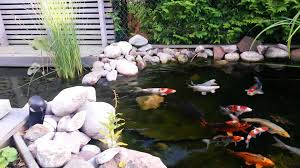 Small Backyard Koi Pond - YouTube Backyard With Koi Pond And Stones Beautiful As Water Small Kits Garden Pond And Aeration Diy Ponds Waterfall Kit Lawrahetcom Filters Systems With Self Cleaning Gardens Are A Growing Trend Koi Ponds Design On Pinterest Landscape Prefab Fish Some Inspiring Ideas Yo2mocom Home Top Tips For Perfect In Rockville Images About Latest Back Yard Timedlivecom For Sale House Exterior And Interior Diy