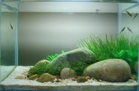by Samuel Clowsley not bad Aquascaping