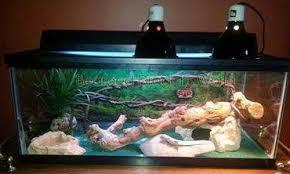 Bearded Dragon Heat Lamp Wattage by Setting Up Bearded Dragon Heating And Lighting Bearded Dragons World