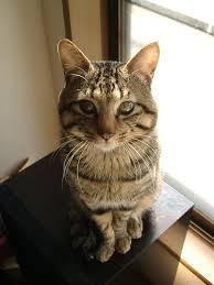 cat in house cat in japan cat in house 26 by iguru71 on deviantart