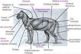 cat digestive system panthera pardus home