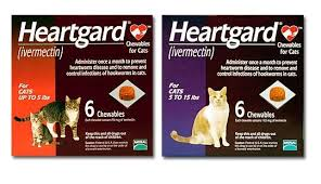 heartgard for cats heartgard for cats chewable feline heartworm tablets