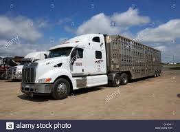 Semi Livestock Trucks Parked At Truck Stop Parking Area In Rural ... Trucks Parked At Rest Area Stock Photo Royalty Free Image Rest Area Heavy 563888062 Shutterstock Food Truck Pods Street Eats Columbus Cargo Parked At A In Canada Editorial Mumbai India 05 February 2015 On Highway Fileaustin Marathon 2014 Food Trucksjpg Wikimedia Commons Beautiful For Sale Okc 7th And Pattison Seattle Shoreline Craigslist Sf Bay Cars By Owner 2018 Backyard Kids Play Pea Gravel Trucks And Chalk Board Hopkins Fire Department Hme Inc