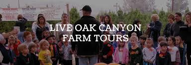 Oak Glen Pumpkin Patch Yucaipa by The Pumpkin Factory Live Oak Canyon Farm Tours