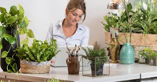 pflanzen zur verbesserung des raumklimas das haus