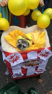 Tompkins Square Halloween Dog Parade by Tompkins Square Halloween Dog Parade Highlights Inspo Tint Me Rose