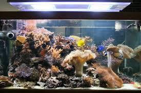 aquarium nano eau de mer quel diamètre de descente pour un nano de 60 litres aquarium