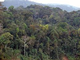 amazonia si e social peruvian amazonia