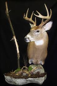 Moose Shed Antler Mounting Kit by If My Deer Cape Doesn U0027t Work For A Pedistool This Is How I U0027m