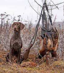 German Shorthaired Pointer Shed Hunter by 83 Best Chasseuse à L U0027affût Images On Pinterest Boho Life And Women