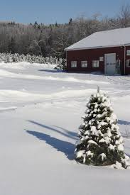 Christmas Tree Shop Bangor Maine by Piper Mountain