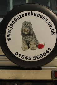 Do Cockapoo Mixes Shed by 73 Best Cockerpoos Images On Pinterest Animals Blue Roan And