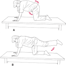 Hypertonic Pelvic Floor Exercises by Women U0027s Health Obstetrics And Pelvic Floor Therapeutic Exercise