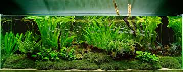 Aquarium Design Group - An Aquascape With Tall Aquatic Plants And ... 329 Best Aquascape Images On Pinterest Aquarium Ideas Floratic Visiting Paradise At Shah Alam Planted Aquarium Aquascape Things Aquariums Aquascaping Malaysia Diy Pertama Kali Aquascaping October 2010 Of The Month Ikebana Aquascaping World Sumida Aquarium Reloaded Fish Tanks And Designs Awesome A Moss Experiment Its All About Current Low Tech Tank Cuisine Wonderful Small Cubical Styles Planted The Surreal Submarine Amuse