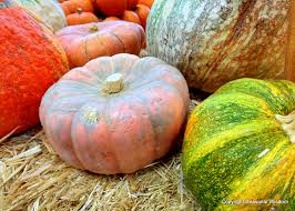 What Kinds Of Pumpkins Are Edible by Unusual Pumpkins Winter Squashes Gourds