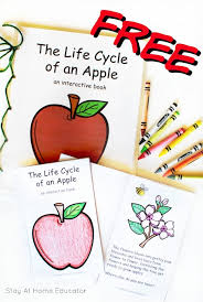 Life Cycle Of A Pumpkin Seed Worksheet apple life cycle printable other apple activities