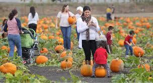 Peter Pumpkin Patch Petaluma by Patchy Fun Around Sonoma County