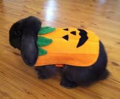 Can Bunny Rabbits Eat Pumpkin Seeds by 61 Best Hoppy Halloween Bunny Rabbits Images On Pinterest Bunny