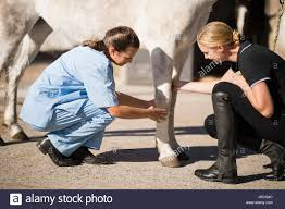 Horse, Vet, Leg Stock Photos & Horse, Vet, Leg Stock Images - Alamy Professional Senior Vet Standing Near Calves Barn In Livestock Veterinary Skills Center Lincoln Memorial University About Us Meadowridge Hosp Groton Ny Red Hospital Vetenarian Dahlonega Ga Usa Houses Missing Family House Old Wooden Shed Pine Path Photo Gallery Mccmaple Woods Tech Hosts Successful Haunted Farmer And Vet With Turkey In Barn Stock Royalty Free Image Midsection Of Female Examing Horse At Project 365 Day 16 Vintage Emily Carter Mitchell Sugar Factory Clinic Horse Stethoscope Photos
