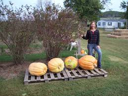 Pumpkin Patches In Arkansas by Mountain Home Berry Farm About Us
