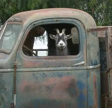 Truck Driver Goat Funny Goats Farm Life Old Trucks Blue Truck Photo ... Prime News Inc Truck Driving School Job Team Run Smart 5 Ways To Show Respect A Truck Driver 7 Big Changes In Expedite Trucking Since The 90s Expeditenow Magazine Astazero Proving Ground Volvo Trucks Truck Driver April 2018 300 Pclick Uk Tailgater Giveaway Sweepstakes Giveawayuscom Magz Ed 30 December 2016 Gramedia Digital Nz May By Issuu A Portrait Of And Family Man C Is New Truckmonitoring Technology For Safety Or Spying On Drivers Reader Rigs Gallery Ordrive Owner Operators