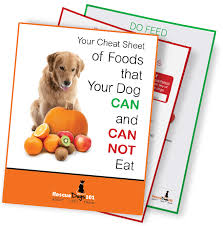Pumpkin For Pets Diarrhea by Your Ultimate Guide To Dogs And Pumpkin U2013 Can My Dog Eat Pumpkin