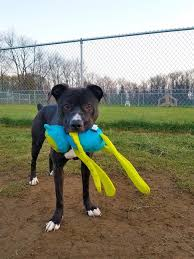 Now We Challenge You To Paw It Forward Get Creative With Could Donate Lightly Used Toys Take Nice Photos Of The Animals Help Them Adopted