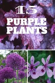 15 Eye Popping Purple Plants