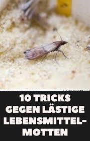 10 tipps wirken nachhaltig gegen lebensmittelmotten