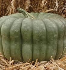 Natural Fertilizer For Pumpkins by Queensland Blue Pumpkin Seeds