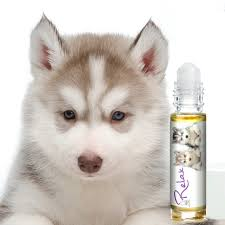 Husky Wet Tile Saw by Relax Dog Aromatherapy For Siberian Husky Anxiety Relief