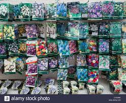 packaged crocus anemone and snowdrop bulbs for sale in autumn in a