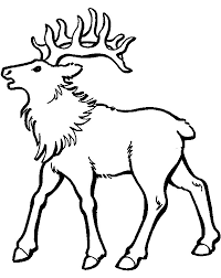 Realistic Caribou Coloring Pages