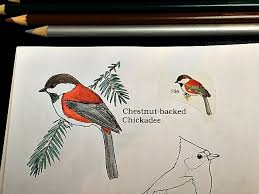 Chestnut Backed Chickadee In The Peterson Birds Color Field