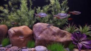 Current USA Satellite Freshwater Aquarium LED Light Pet Supplies