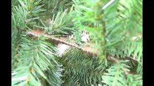 Balsam Hill Christmas Tree Sale by Balsam Hill Artificial Christmas Tree Unboxing Setup And