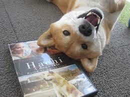 Do Shiba Dogs Shed by Shiba Inu World 2013