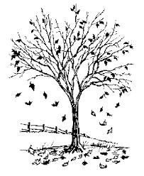 Fallen Leaves Nature s Fertilizer