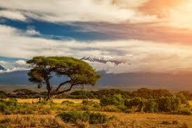 Mount Kilimanjaro Amboseli Kenya