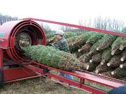 Wholesale - Twinsberry Tree Farm Ricciardis Tree Farm A Family Tradition Since 1984 Looking For A Christmas Tree Life Culture News Pine Barn Signature Series Wound Warrior Project The Daily Record Ohio Find It Here Christmas Farms In Ohio Rainforest Islands Ferry Wooster Oh Summer 16 Pinterest Catchy Collections Of Fabulous Homes Treehouses Mohicans Rustic Wedding Venue House Will Moses Gallery Green Acres