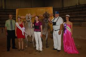Halloween Express Milwaukee State Fair by News Ohio State Fair Brown Swiss Show Aug 2