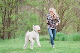 100 non shedding dogs australia intentional australian