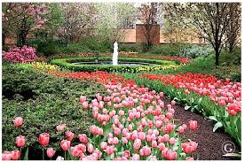 garden design garden design with planting tulip bulbs in