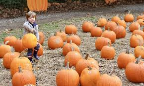 Pumpkin Picking Nj by New Jersey Pumpkin Patches And Places To Visit With Families In