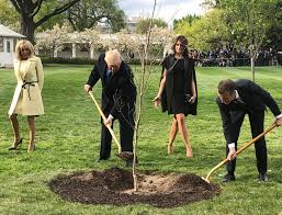 Symbolic Friendship Tree Planted By Trump And Macron Has ... Little Trees Coupon Perfume Coupons City Of Kamloops Tree Now Available Cfjc Today Housabels Com Code Untuckit Save Money With Cbd You Me Codes Here Premium Amark Coupons And Promo Codes Noissue Coupon Updated October 2019 Get 50 Off Mega Tree Nursery Review Online Local Evergreen Orchard Lyft To Offer Discounted Rides On St Patricks Day Table Our Arbor Foundation Planting Adventure Tamara 15 Canada Merch Royal Cadian South Carolinas Is In December Not April 30 Httpsoriginscouk August