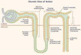 High Ceiling Diuretics Ppt by Diuretics Notes Images U0026 Powerpoint Presentations Bookbing Org